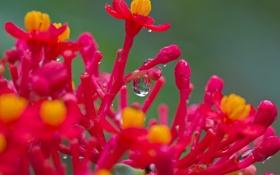 Обои экзотика, роса, растение, капля, вода, цветы