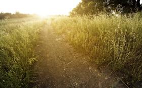Картинка дорога, поле, лето, свет, природа