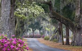 Обои дорога, деревья, пейзаж, природа, растение, куст, аллея