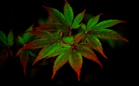 Обои листья, природа, ветка, полумрак