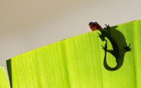 Картинка макро, лист, ящерица