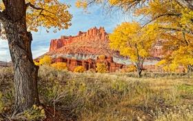 Картинка США, осень, скалы, Юта, Capitol Reef National Park, деревья, трава