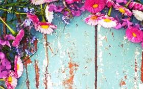 Обои цветы, ромашки, полевые цветы, фиалки, маргаритки