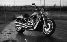 Картинка мотоцикл, Harley Davidson, байк, мотор, чёрно-белый, харлей девидсон, v-rod
