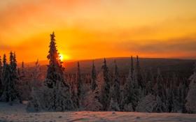 Картинка закат, Лапландия, небо, облака, Финляндия, деревья, зима
