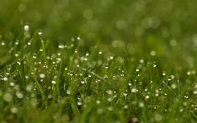 Обои капли, трава, блики, роса, green, зелень, свежесть