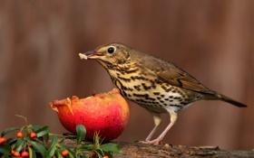 Картинка листья, ягоды, дерево, птица, яблоко, ветка, размытость