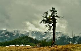 Обои лес, снег, горы, туман, дерево, ёлки
