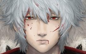 Картинка кровь, парень, красные глаза, белые волосы, Gintama, Sakata Gintoki