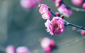 Обои цветок, лепесток, веточка, бутон