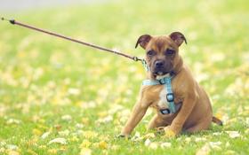 Обои трава, ошейник, луг, зелень, собаки собака, обои, природа