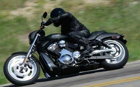 Обои матовый, харлей, чоппер, Harley Davidson
