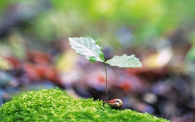 Обои весна, росток, трава, зелень, листок, размытость, листик