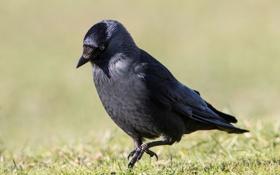 Картинка трава, птица, черная