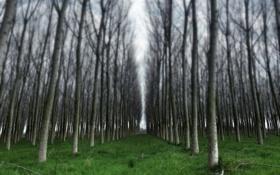 Обои деревья, пейзаж, природа