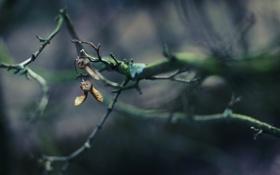 Картинка лес, ветки, природа, фото, фон, ветви, обои