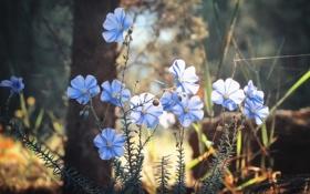 Обои трава, цветы, лепестки, голубые