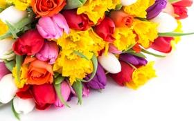 Обои букет, тюльпаны, цветы