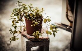 Картинка фон, растение, горшок, подставка