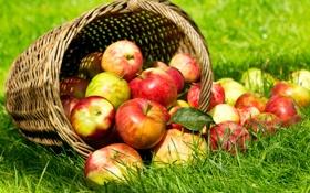 Картинка summer, fruits, apples