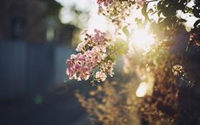 Картинка листья, цветы, ветка, лепестки, розовые