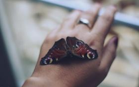 Обои рука, кольцо, бабочка