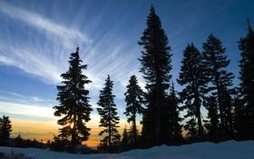 Обои зима, лес, небо, снег, пейзаж, закат, природа