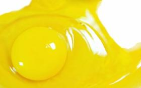 Обои макро, желток, яицо