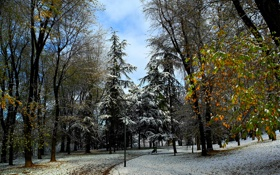Картинка природа, зима, парк, деревья, фото