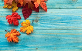 Обои осень, листья, дерево, клён