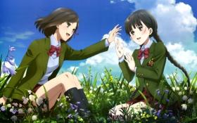 Обои лето, небо, цветы, девушки, божья коровка, форма, suzuhara izumiko