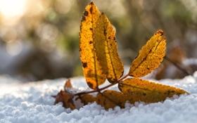 Картинка зима, снег, желтый, лист, осенний