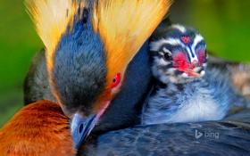 Обои птица, краски, перья, птенец