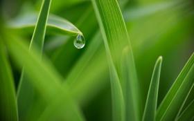 Картинка лето, трава, макро, зеленый, роса, капля