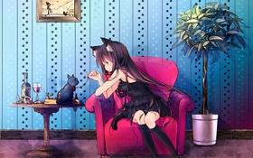 Обои вино, кресло, киса, девочка