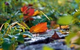 Обои природа, листья, осень, трава, земля