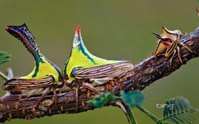 Обои крылья, борьба, ветка, насекомое, экзотика, горб