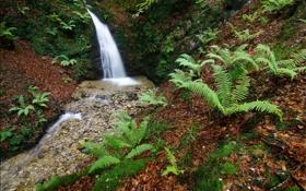 Обои лес, деревья, природа, река, ручей, камни, водопад