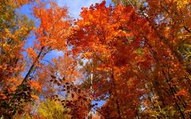 Обои осень, небо, листья, деревья, Канада, Онтарио, багрянец