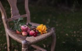 Картинка яблоки, подсолнух, стул