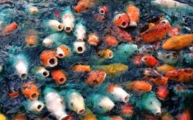Картинка вода, рыбы, природа
