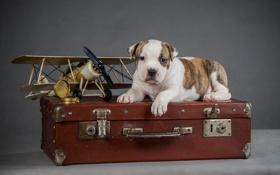 Картинка самолет, собака, щенок, чемодан, puppy, airplane, suitcase