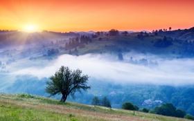 Картинка солнце, деревья, туман, рассвет, холмы