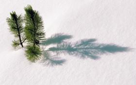 Обои тень, снег, ель