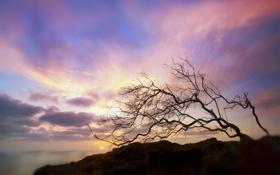 Картинка море, солнце, облака, закат, скала, дерево, размытость