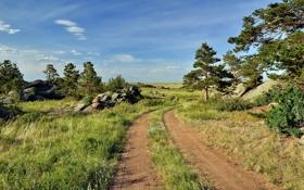 Картинка дорога, лето, пейзаж, природа