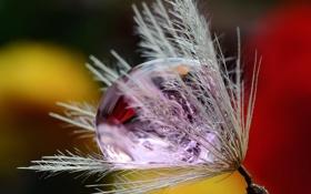 Картинка природа, роса, капля, былинка