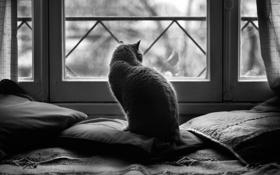 Обои чёрно белое фото, окно, candela, чёрно белые дни, чб фото, подушки, кошка