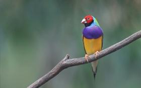 Картинка птица, краски, ветка, перья