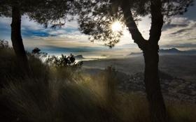 Картинка солнце, лучи, деревья, травы